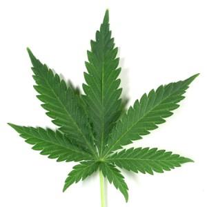 Cannabis marijuana thérapeutique