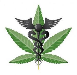 La marijuana biologique peut être utilisée comme plante médicinale
