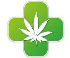 La marijuana biologique est utilisée depuis des millénaires pour ces vertus thérapeutiques