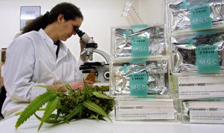 Le cannabis bio possède des vertus démontrées scientifiquement contre la douleur