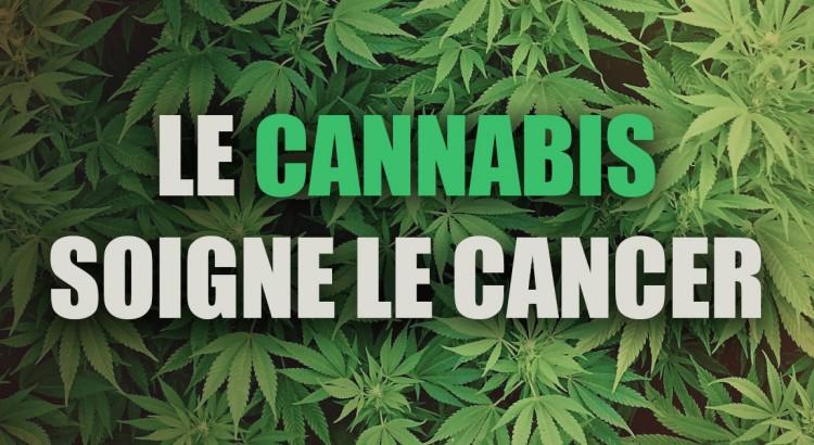 Le cannabis est une plante anti cancer naturel puissant